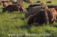 Grass Finishing