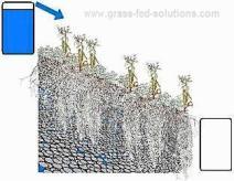 Pasture Management with Electric Fences: Soil Moisture