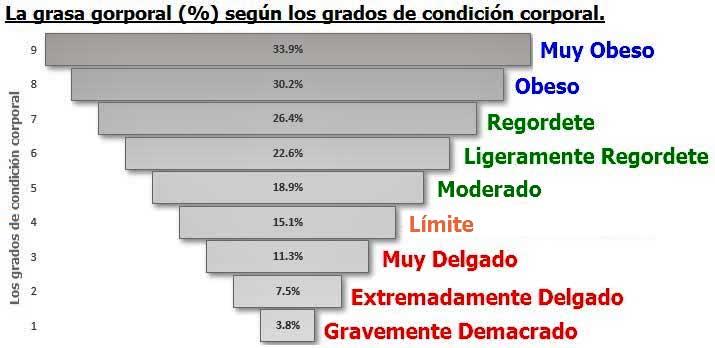 Los Grados de Condición Corporal vs La grasa corporal (%)
