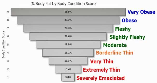 Cattle Body Condition Scores vs Body Fat %