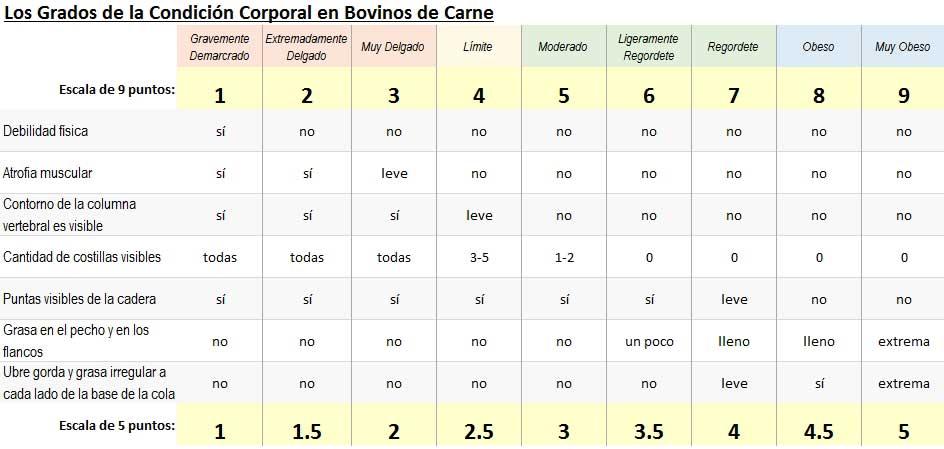 Los criterios de los grados de condición corporal de ganado