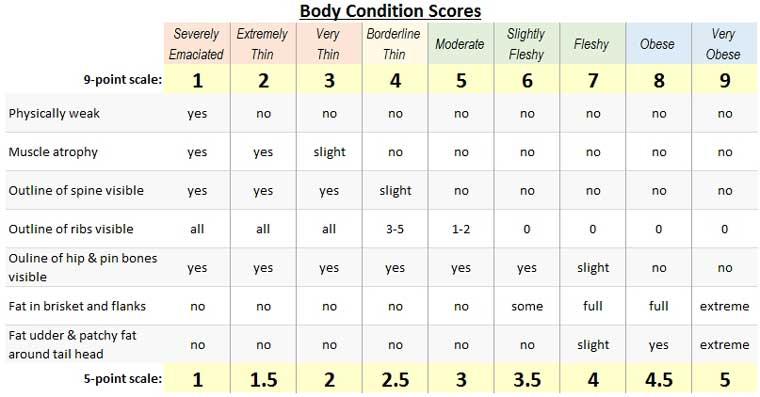Cattle Body Condition Scores - criteria