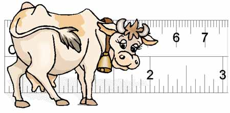 Cattle Body Condition Scoring