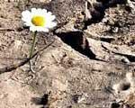 Drought Management (2/2)