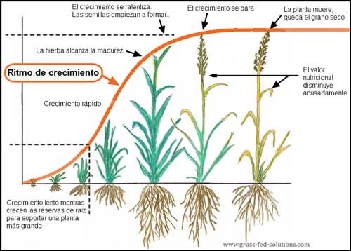 Regla de Pastoreo # 3 - Maximizar las tasas de crecimiento