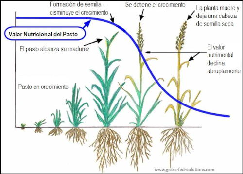 Valor Nutricional del Pasto