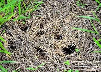 Rancho El Yaqui - agujeros hechos por armadillos