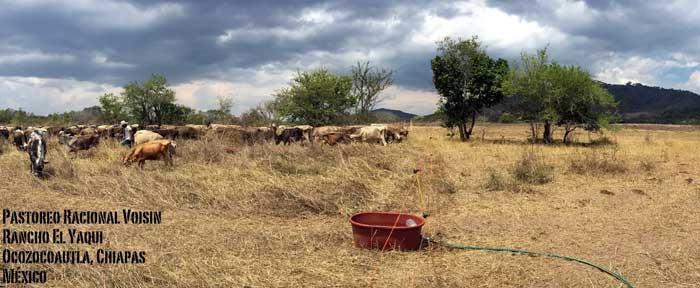 Rancho El Yaqui - remanente de pasto durante la temporada seca