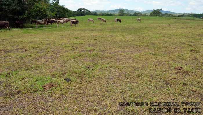 Rancho El Yaqui - remanente de pasto durante la temporada de lluvia