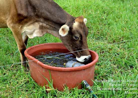 Mobile Water at Rancho El Yaqui