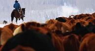 Simplifying Beef Cattle Management With Your Smart Electric Fence Grid