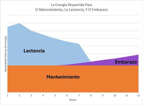 Los requerimientos de energía del ganado