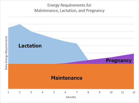 Cattle Energy Requirements
