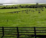 Cattle fences are your 3-D farm plan