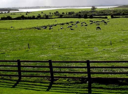 Cattle fences are your 3-D farm plan