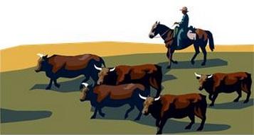 cattle links