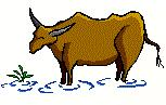 Daily Cattle Water Requirements