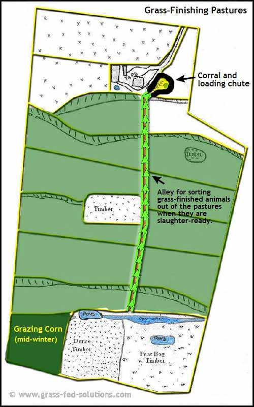 Example Farm Plan: grass-finishing plan