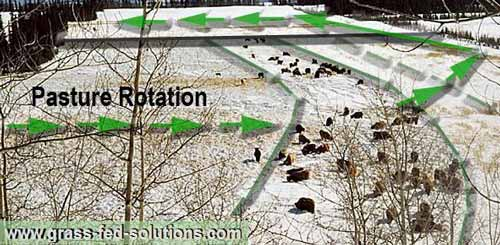 Grazing rotation in winter