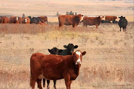 Share Your Grazing Strategies