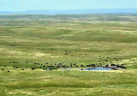 Herd Migration