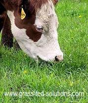 Intensive Grazing Short Grass