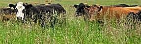 Regla de Pastoreo # 6: Aprovechar el verano para crear pastos para el invierno