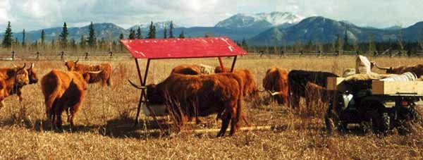 Mobile Mineral Feeder On Pasture