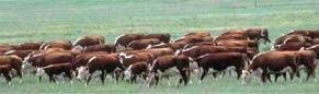 Regla de Pastoreo # 1 - Franjas diarias de pastoreo
