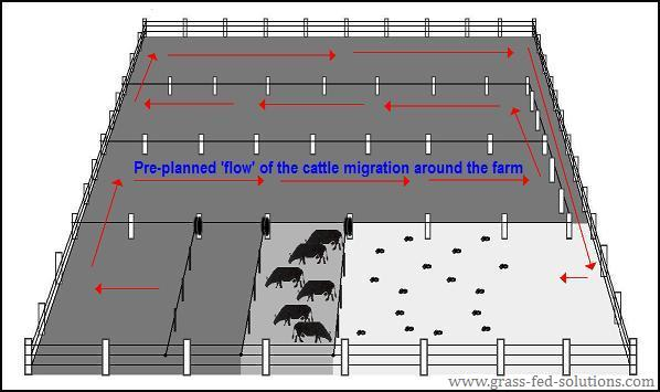 Portable Electric Fences In A Grazing Plan