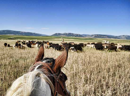Raising Beef Cattle To Thrive In Your Pasture Rotation