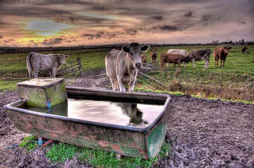 how to make a portable water troughs for cattle