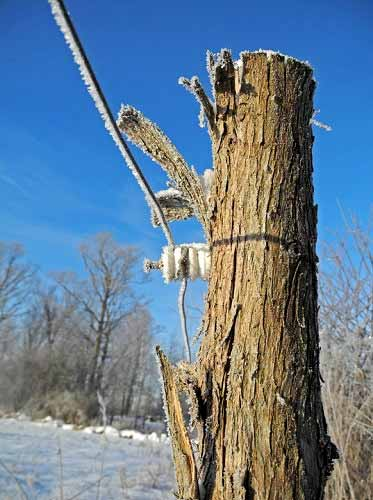 Winter Electric Fencing Tips