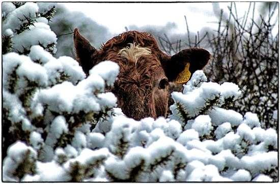 CME: Зима негативно сказалась на работе мясокомбинатов