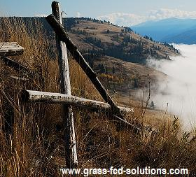 Planning your Cattle Fences