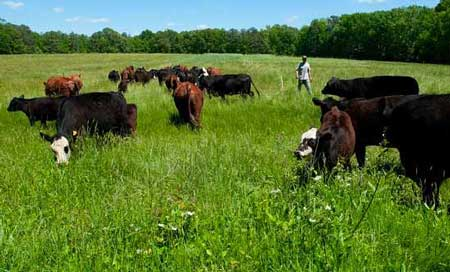 Daily Pasture Rotation