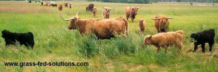 Electric cattle fencing