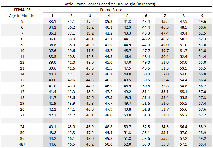 Frame Score based on Hip Height - Female Cattle
