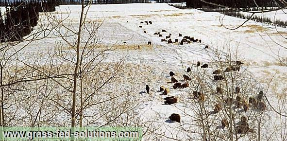 Intensive Grazing - Winter Pasture