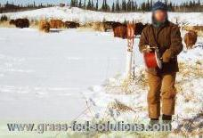 Intensive Grazing During the Winter
