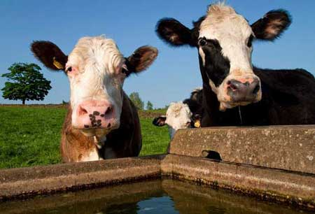 How to Build a Mobile Cattle Water System