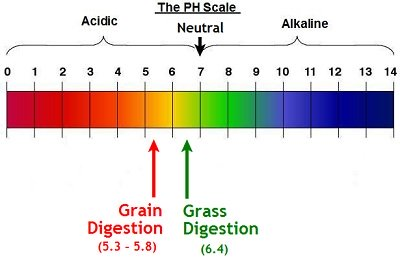 pH scale for cattle digestion
