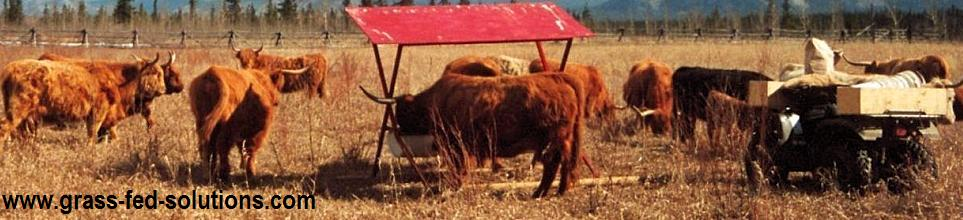 Pasture Management - Using Cattle for Reseeding
