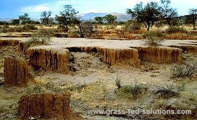 Pasture management to reduce erosion