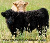 Ideal Calving Date for Raising Cattle