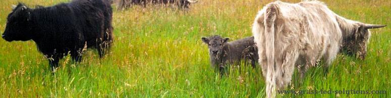 Raising cattle to calve during the summer