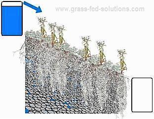 Soil moisture runnoff from well-vegetated pastures.