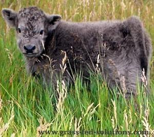 Calving during the midst of the prime growing season.