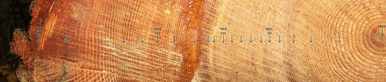 Tree rings provide a fantastic overview of the wide range of growing conditions you should expect in your area.